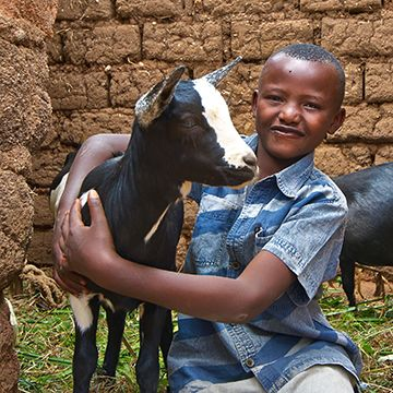 Your legacy gift of £120 can give goats to four families